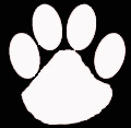Wildcat paw