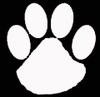 Wildcat_paw